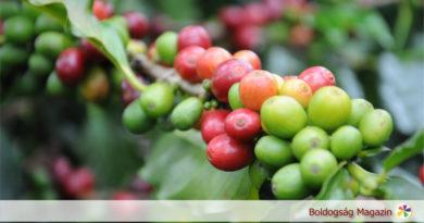 Ami jó a kávéban